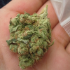 Top quality mmj and buds,hemp oil,wax,hash, pills and  others available