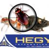 RAT & Roaches control treatments, Doha Qatar